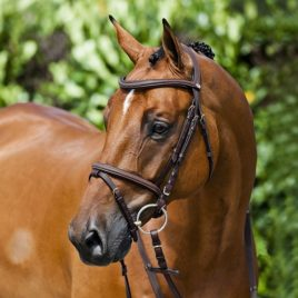 Stitched Hanoverian Bridle