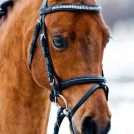 Diamante Hanoverian Bridle